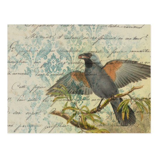 Vintage Style Bird on Branch with Writing Postcard ...
