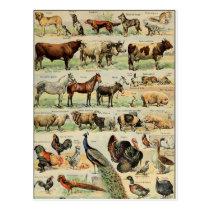Vintage Style Farm Animals Postcard