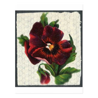 Vintage Style Red Pansy Postcard