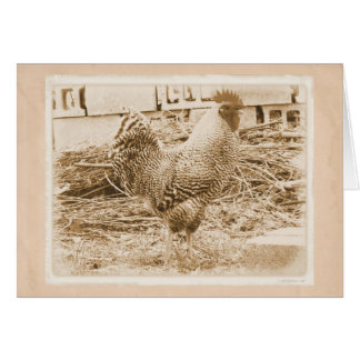 Vintage Style Rooster Photograph Card