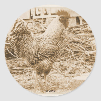 Vintage Style Rooster Photograph Classic Round Sticker