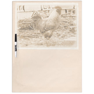 Vintage Style Rooster Photograph Dry-Erase Board
