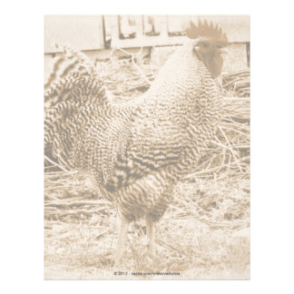 Vintage Style Rooster Photograph Letterhead