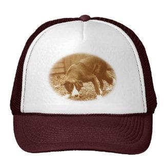 Vintage Style Smooth Border Collie Trucker Hat