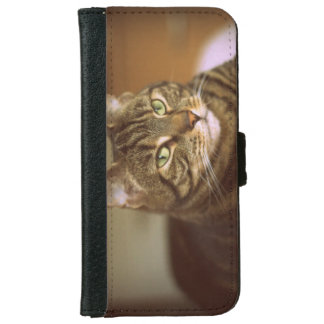 Vintage Style Tabby Cat Photograph 1960s iPhone 6/6s Wallet Case