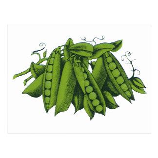 Vintage Sugar Snap Peas, Foods, Healthy Vegetables Postcard