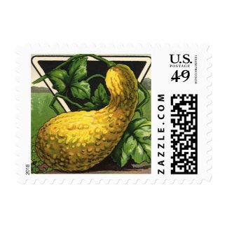 Vintage Summer Squash Seed Packet Label Art Postage Stamp