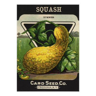 Vintage Summer Squash Seed Packet Label Art Posters