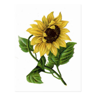 79 best Drawing  Sunflowers images on Pinterest