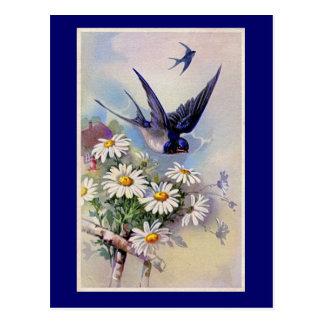 Vintage Swallow Print Postcard