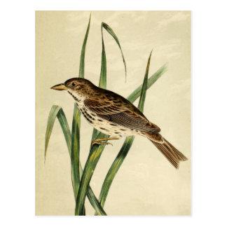 Vintage Swamp Swallow Postcard