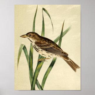 Vintage Swamp Swallow Posters