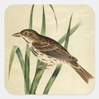 Vintage Swamp Swallow Square Sticker