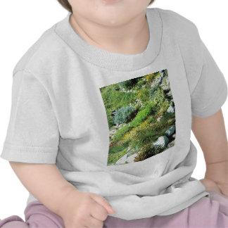 Vintage Switzerland, Schynigge Platte, Oberland, T-shirts