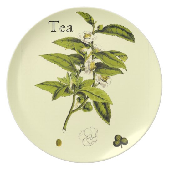 Vintage Tea Botanical Illustration Plate