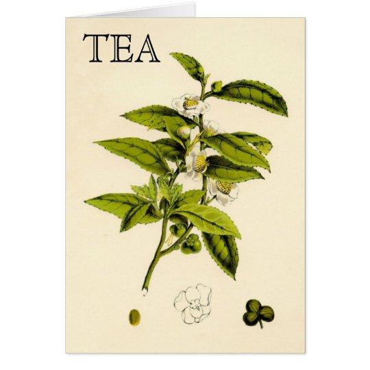 Vintage Tea Plant Card