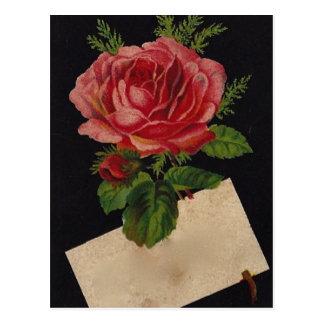 Vintage Tea Rose Postcard