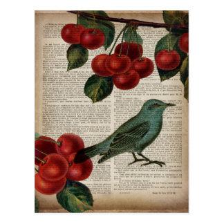 vintage teal bird botanical art red cherry postcard