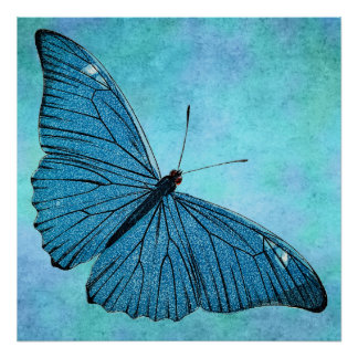 Vintage Teal Blue Butterfly 1800s Illustration Poster
