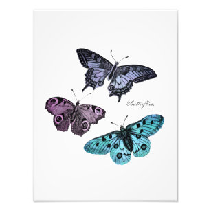 Vintage Blue Butterfly Photo Prints Photography