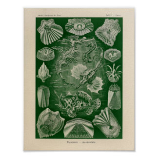 Vintage Teleostei Color Ernst Haeckel Art Print