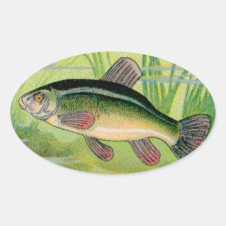 Vintage Tench Fish Print Oval Sticker