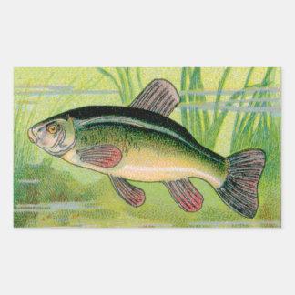 Vintage Tench Fish Print Rectangular Sticker