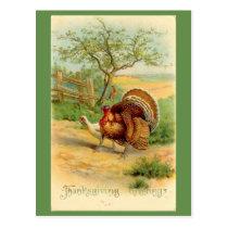 Vintage Thanksgiving Turkey and Chicken In Pasture Postcard