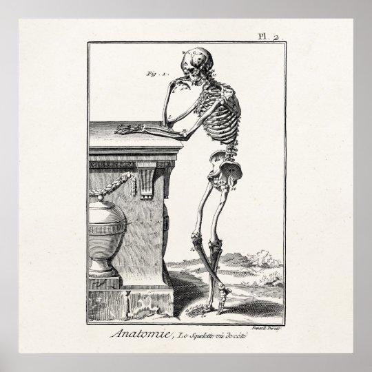 vintage thinking human skeleton medical anatomy poster | zazzle, Skeleton