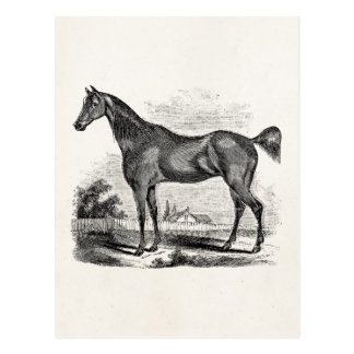 Vintage Thoroughbred Horse Equestrian Personalized Postcard