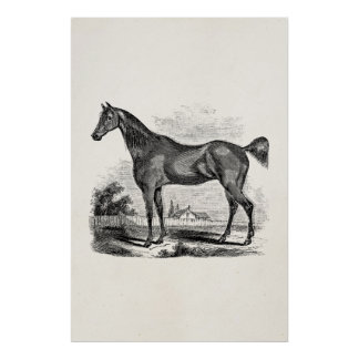 Vintage Thoroughbred Horse Equestrian Personalized Poster