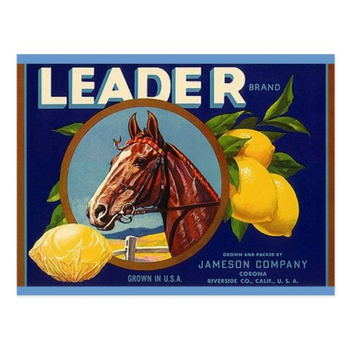 Vintage Thoroughbred Horse Leader Lemons Postcards
