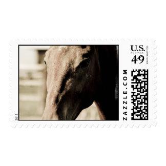 Vintage Thoroughbred  Postage Stamp