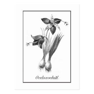 Vintage tiger flower etching card