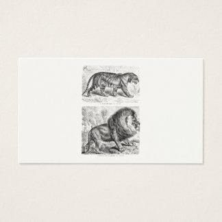 Vintage Tiger Illustration Tigers Template Business Card
