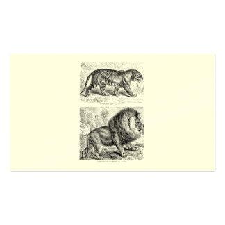 Vintage Tiger Illustration Tigers Template Business Cards