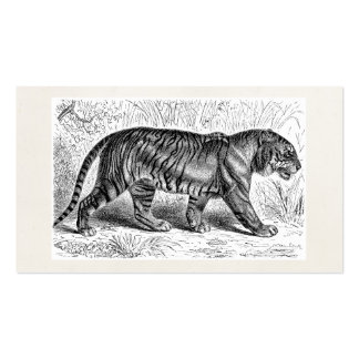 Vintage Tiger Illustration Wild Tigers Template Double-Sided Standard Business Cards (Pack Of 100)
