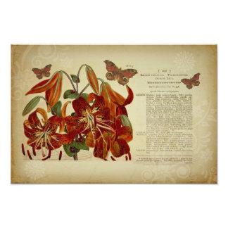 Vintage Tiger Lily Botanical Illustration Art Photo