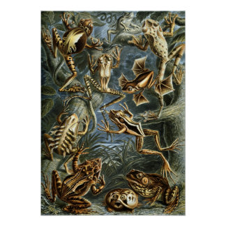 Vintage Toads and Frogs Batrachia by Ernst Haeckel Poster