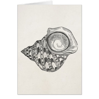 Vintage Top Seashell Antique Shells Template Stationery Note Card