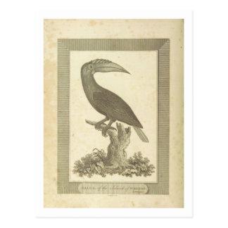 Vintage toucan bird etching card