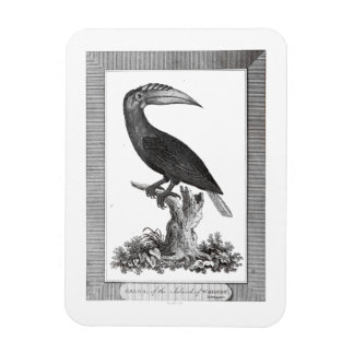 Vintage toucan bird etching magnet