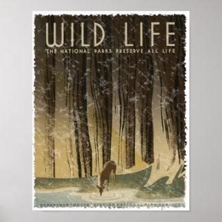 Vintage Travel Poster - Wildlife circa 1934