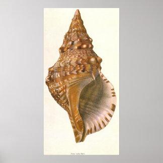 Vintage Triton Seashell Shell, Marine Ocean Animal Poster