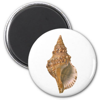 Vintage Triton Shell Seashell, Marine Ocean Animal 2 Inch Round Magnet