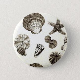vintage tropical beach seashell wedding button