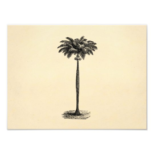 vintage tropical island palm tree template blank photo print