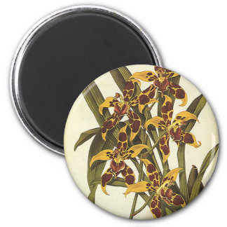 Vintage Tropical Odontoglossum Orchid Flowers Magnet