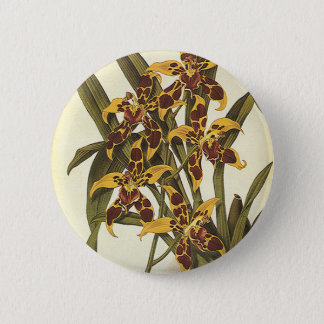 Vintage Tropical Odontoglossum Orchid Flowers Pinback Button