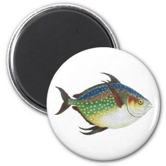Vintage Tropical Opah Fish, Marine Aquatic Animal 2 Inch Round Magnet
